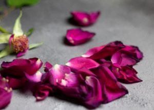 cremation service in Columbia, MD